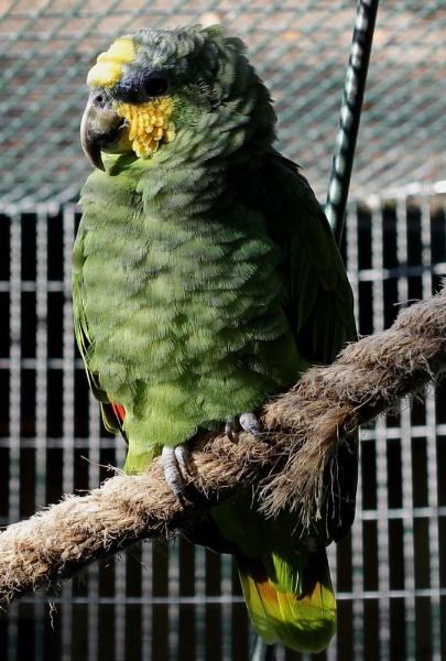 Parrot colours by pdcche