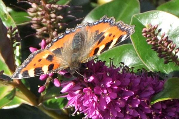 Butterfly by CarolineH120
