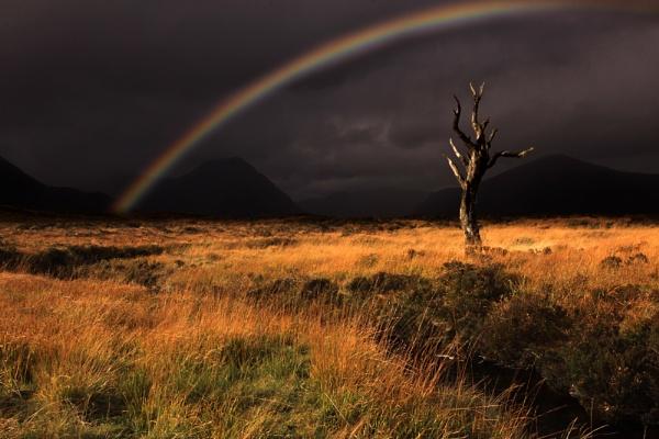 Lone Tree - Glencoe by wolfy