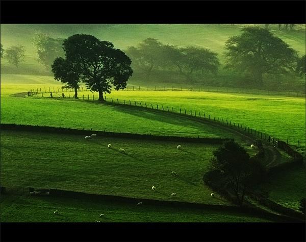 Milton Morn... by woodlark