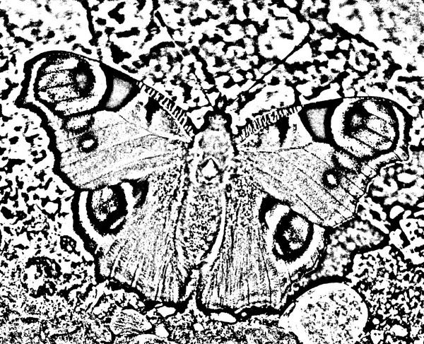 Stencil Butterfly by pmeswani