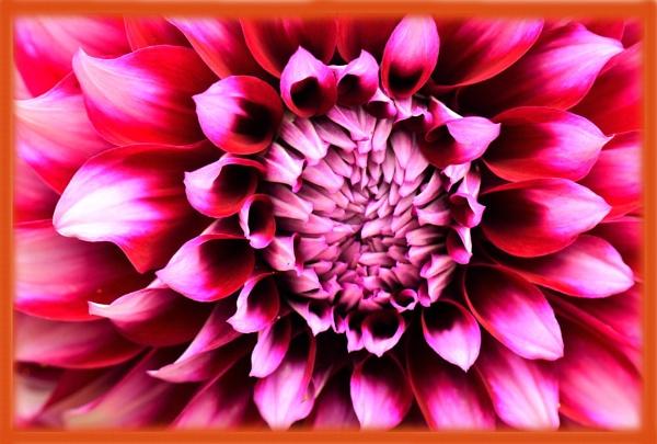 flower in macro by rajasekaranamie