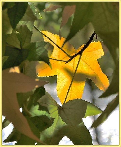 Yellow & Green by JPatrickM