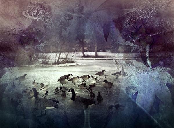 On Frozen Pond by helenlinda