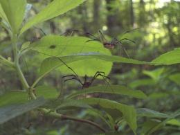 Spider flats