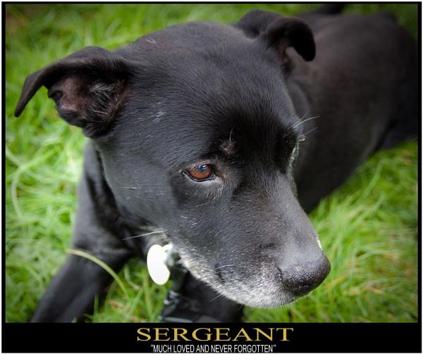 Sergeant by dabhandphotographics