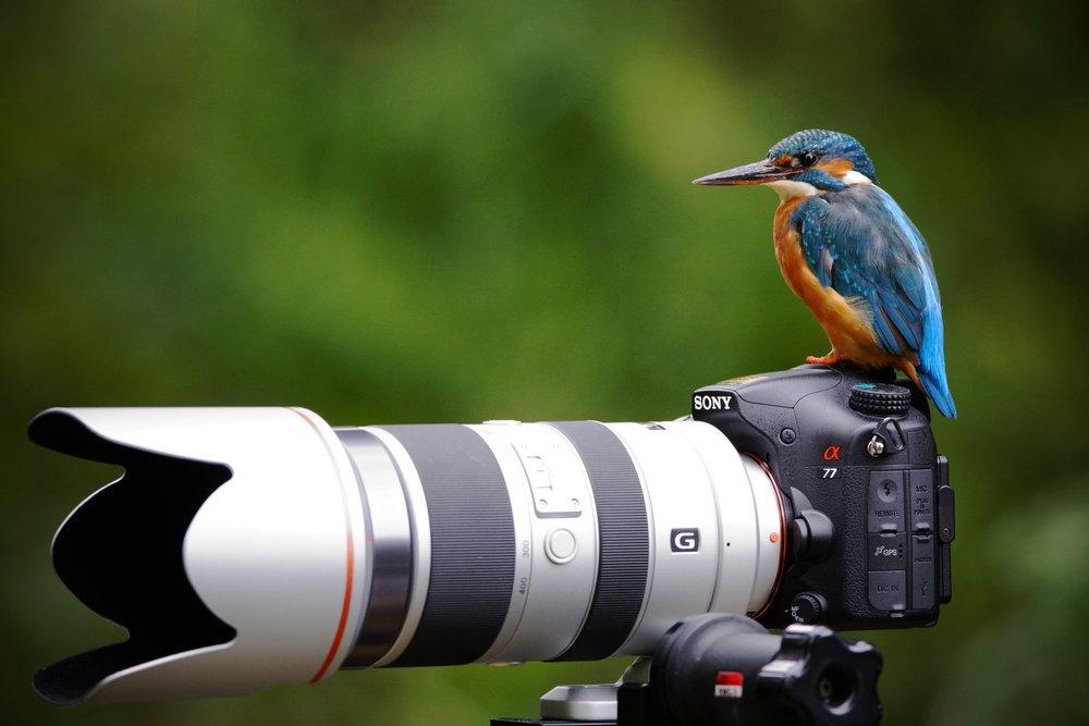 нет, камера для фотографирования птичек предмет, ваза или