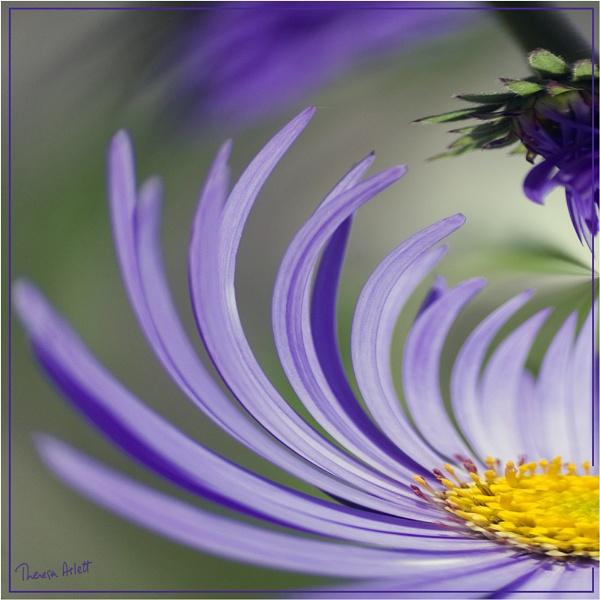Purple Petal Power by AshTree