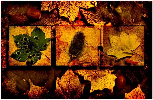 Texture aumtumn triptych by jamestheboy