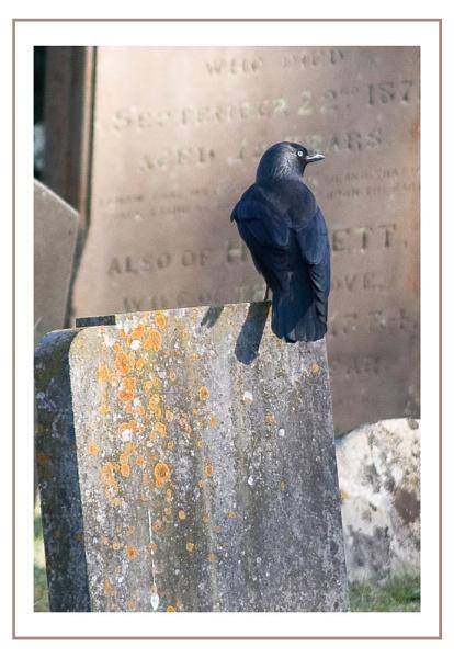 Churchyard Visitor