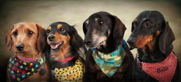 Ruby, Roxy,Olliey,Bella by FP4