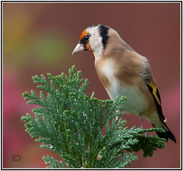 top bird by p147180r