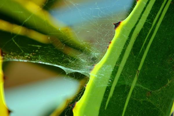The Web! by Chinga