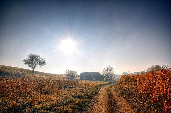 Frosty Morning by gabymarian