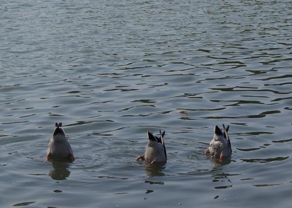 Duck! by Capn