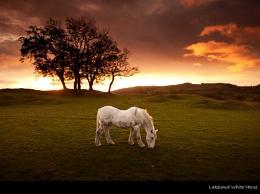 Lakeland White Horse