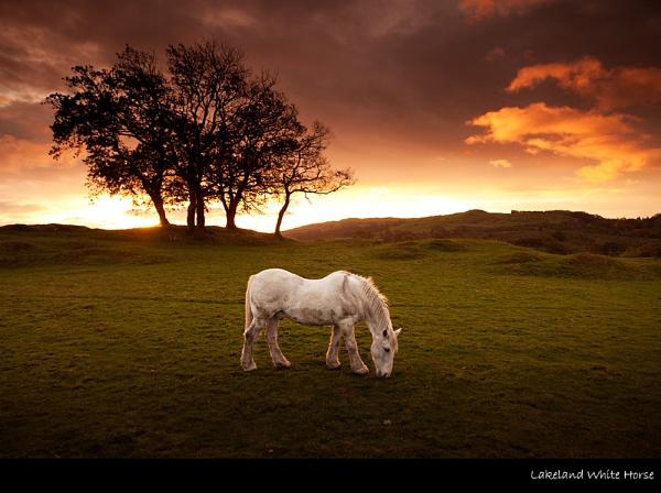Lakeland White Horse by stevie