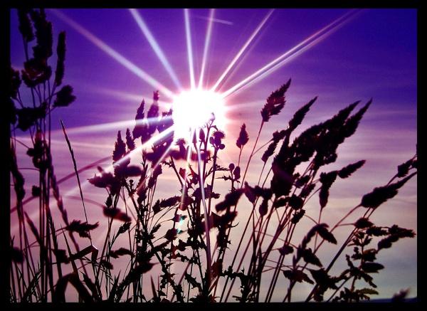 Purple Sunset by JealouslyBlue
