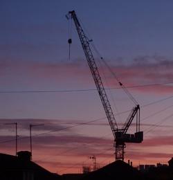 Morning Crane