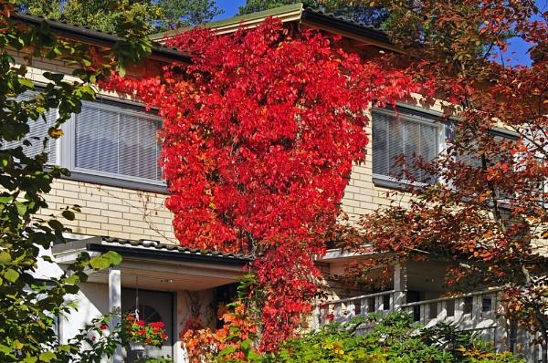 The Autmn  Leaves. by kuvailija
