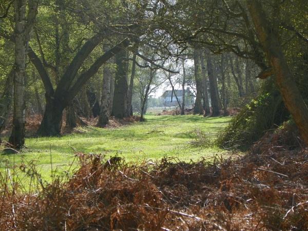 Fen Wood Walk by CherWass