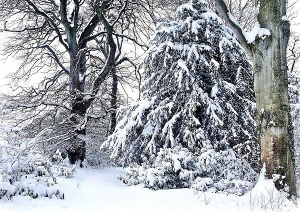 Woodland Winter by nazimundo