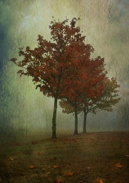 Autumn, Canvas by wyatturp