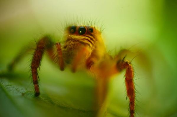 spider by rajasekaranamie