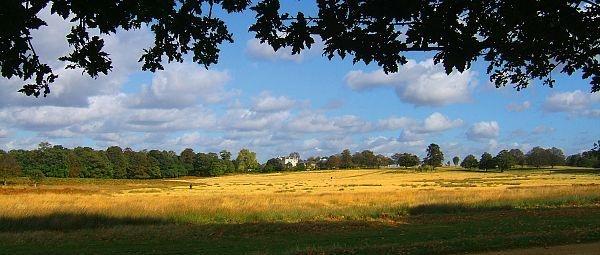 Richmond Park by nytecam