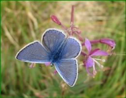 Leckhampton Blue
