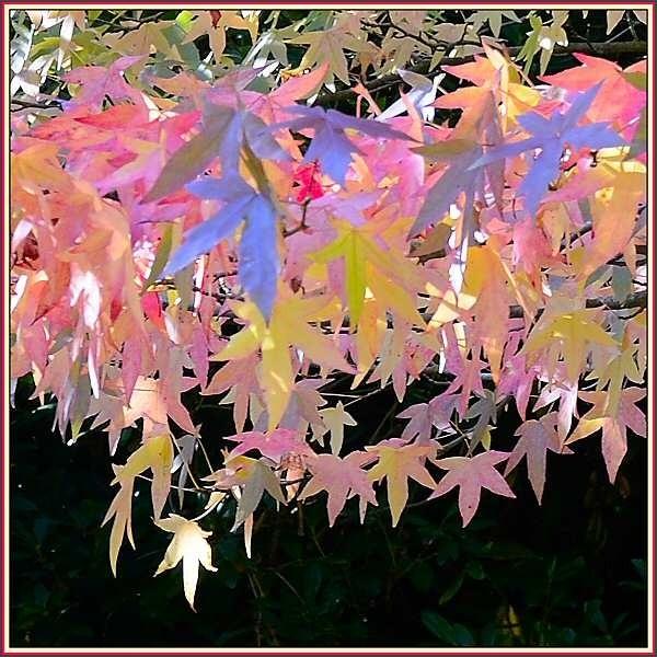 Autumn shades by JPatrickM