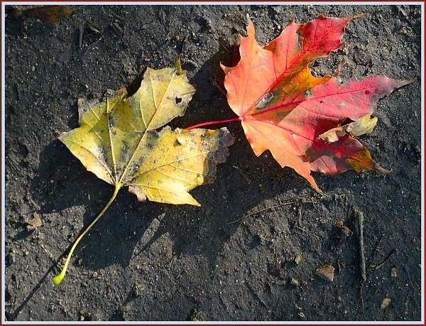 Two Leaves by JPatrickM