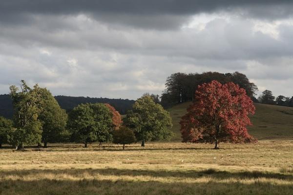 Petworth Park by EDan