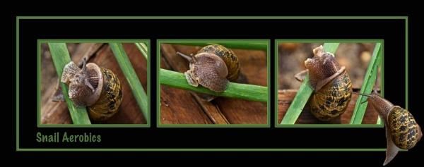 Snail Aerobics by Joeblowfromoz