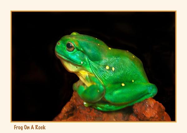 Frog On a Rock by Joeblowfromoz