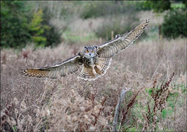 Kaln-Gloucester Barn Owl Centre by maroondah