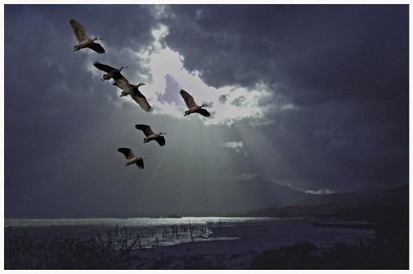 Night  Flight by Moonlight. by accipiter