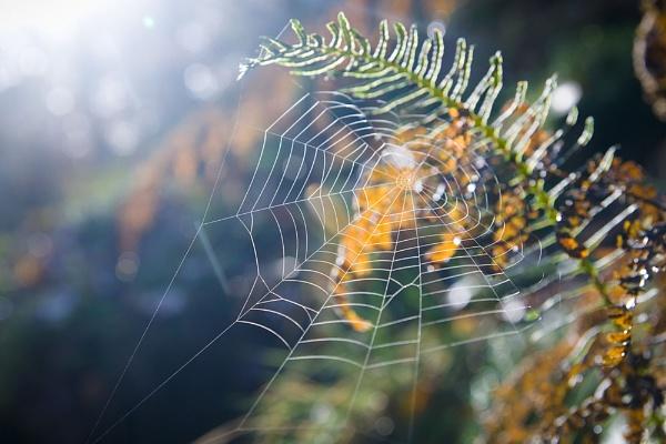 Web by raamaa