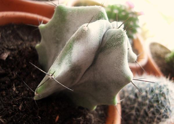 cactus(: by maryatsix