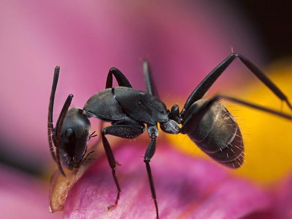 Ant by zanzibarwinds