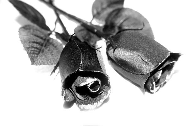 ...Black Roses... by Lu1989