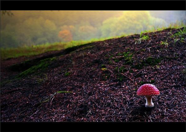 Magical..... by woodlark
