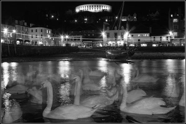 Swans by night by hsreid