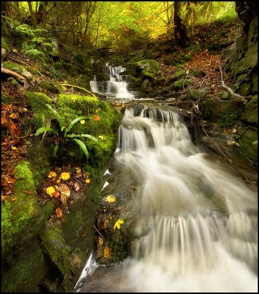 Autumn Falls by Platchet
