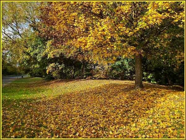 Golden carpet by JPatrickM