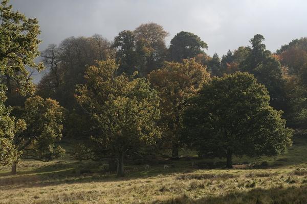 Autumn II by EDan