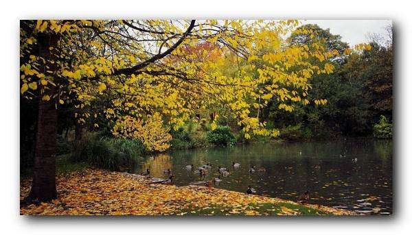 autumn pond by raygregson