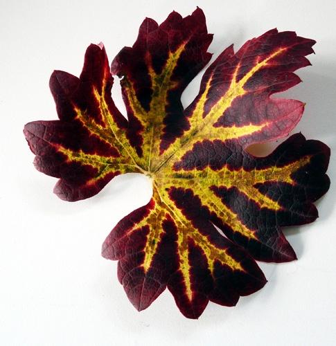 Fallen Leaf by Albertajune