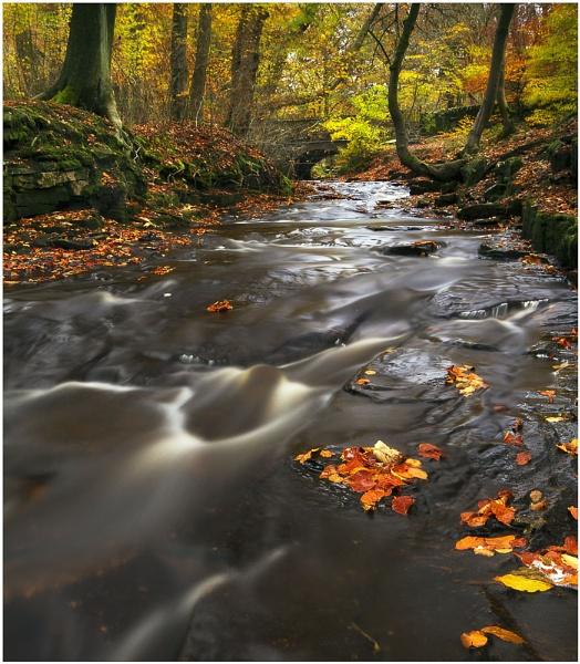 Roddlesworth Autumn Race by JanieB43