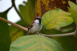 Birds lounge